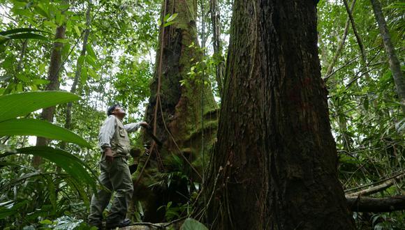 Cinco defensores ambientales fueron asesinados en lo que va del 2020 según Defensoría (Foto: El Comercio)