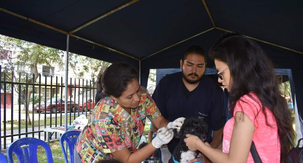 """La presidenta de """"Fundación Rayito"""", Fabiola Alegre, señaló que esta campaña gratuita también tiene la finalidad de recolectar alimentos, medicinas y artículos de limpieza para los perros de calle que alberga su fundación. (Foto: Fundación Rayito)"""