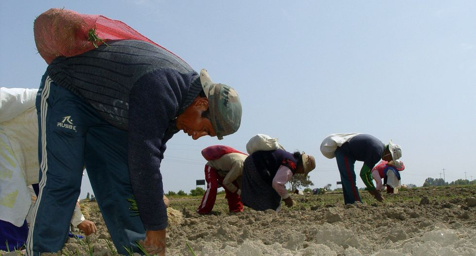 Los agricultores que fueron afectados por El Niño Costero en 2017 y que sostienen deudas vencidas con el sistema financiero tendrán hasta siete meses adicionales. (HEINER APARICIO)