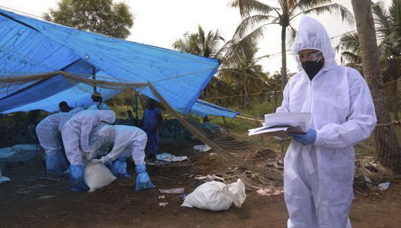 A principios de enero, trabajadores de salud de India sacrificaron decenas de patos después de que se detectó la cepa de gripe aviar H5N8, en Karuvatta. (Foto: AFP)