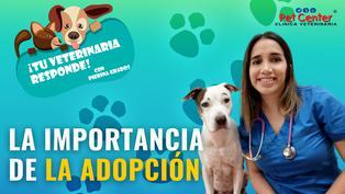 La importancia de la adopción