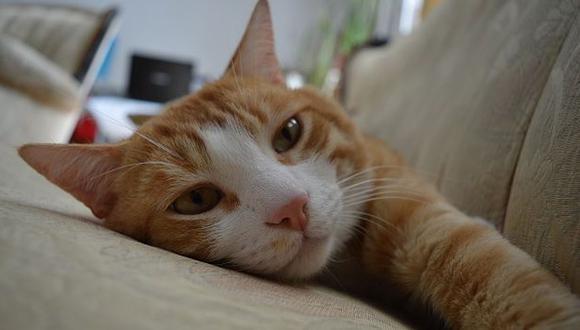 Estos felinos tienen la capacidad para alejarte de la depresión, ansiedad y soledad. (Getty images)