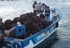 Incautan 1,400 kilos de concha de abanico extraídos de una zona de veda en Ica