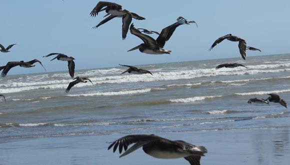 Condiciones cálidas del mar se mantendrán en los siguientes tres meses. (USI)