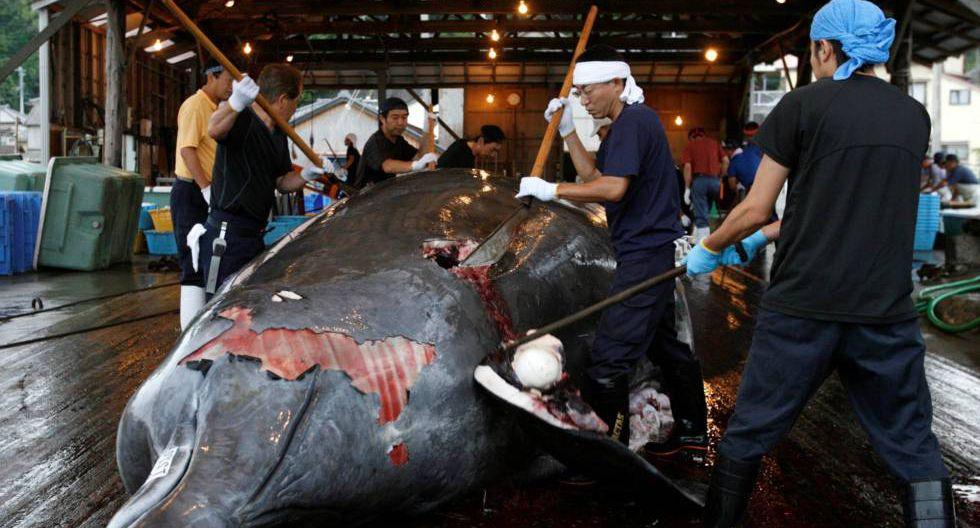 Varios trabajadores despiezan una ballena en el puerto de Minamiboso, al sureste de Tokio.  (Reuters)