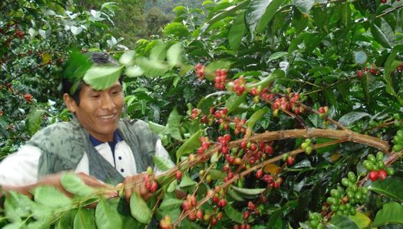 El café es el principal cultivo. (Andina)