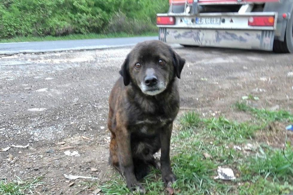 Es viral en YouTube. Conoce la historia de Mowgli, un perro que sorprendió a sus rescatistas por su comportamiento. (Foto: Captura/Howl Of A Dog)