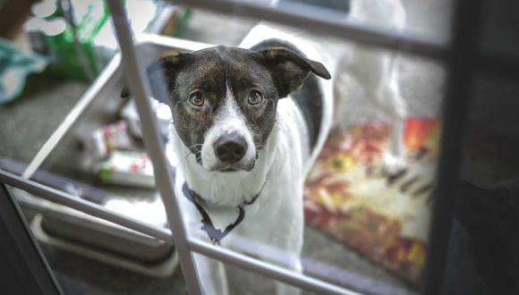La historia del perro fue publicada en redes sociales y se volvió viral casi de inmediato. (Foto: Referencial/Pixabay)