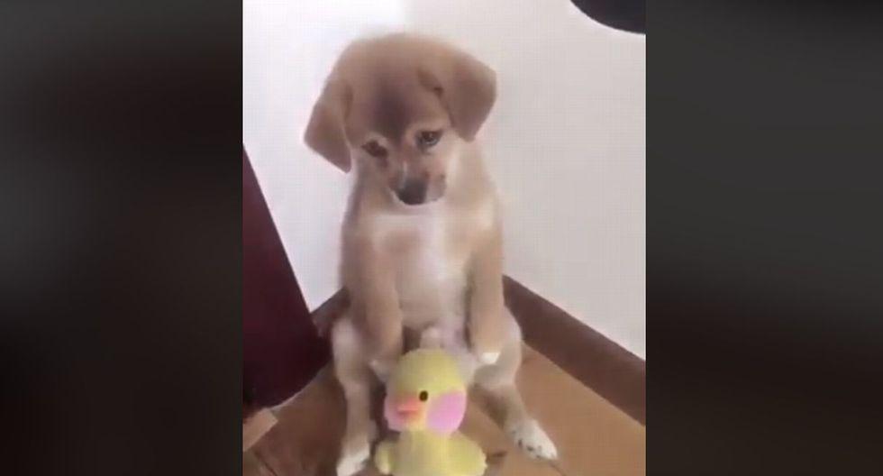 El can escuchó atentamente el castigo y estuvo con cara de arrepentimiento por lo sucedido. (Facebook: @VolveraempezarYuli)