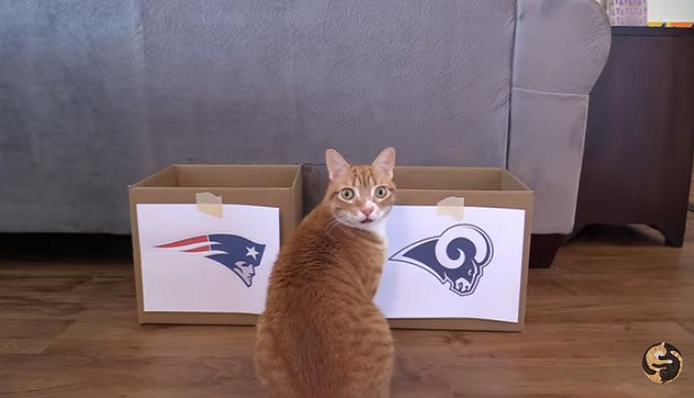 Mientras todo Estados Unidos está contando las horas para que inicie el Super Bowl 2019, estos gatos ya tienen claro quién ganará. (Foto: captura YouTube)