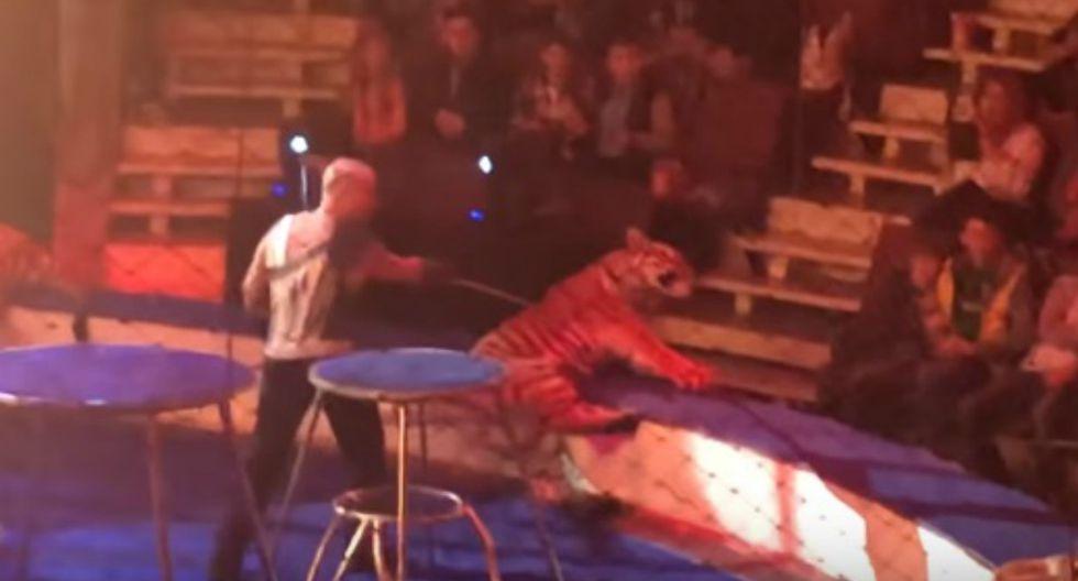 Felino recobró la conciencia varios segundos después de iniciado el espasmo y se retiró del lugar. (Foto: Facebook/Captura)