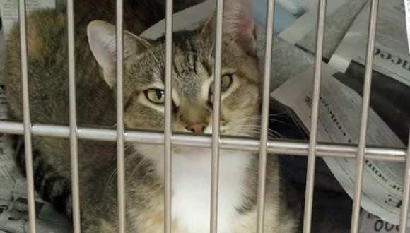 Los gatos son encerrados durante un años antes de ir a la olla. (USI)