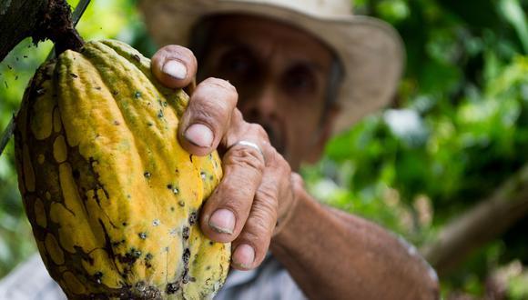 El cacao de Loreto fue premiado como el segundo mejor a nivel nacional