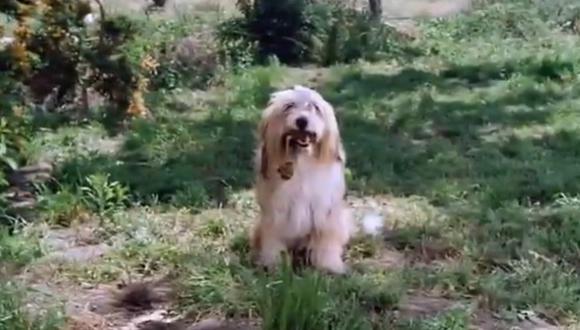 Jack se convirtió en uno de los perros más famosos durante su participación en La Familia Ingalls (Foto: NBC)
