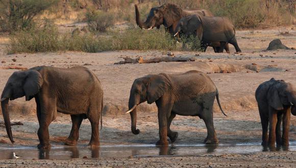 Un grupo de elefantes es visto cerca de un abrevadero dentro del Parque Nacional Hwange, en Zimbabue, el 23 de octubre de 2019. (REUTERS/Philimon Bulawayo/Referencial).