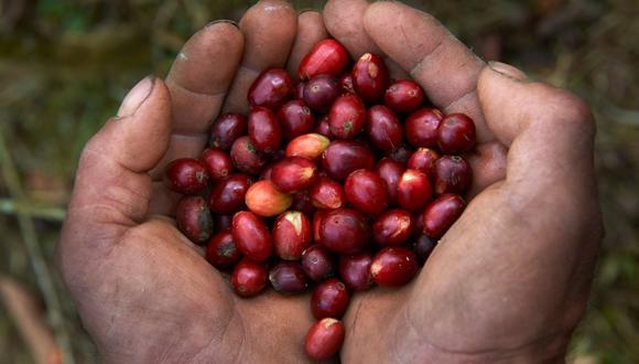 Dora Samaniego explica que se prevé que la demanda de café va a ser el triple de cara al 2050. Foto: Cerezos de Café ©Thomas Muller