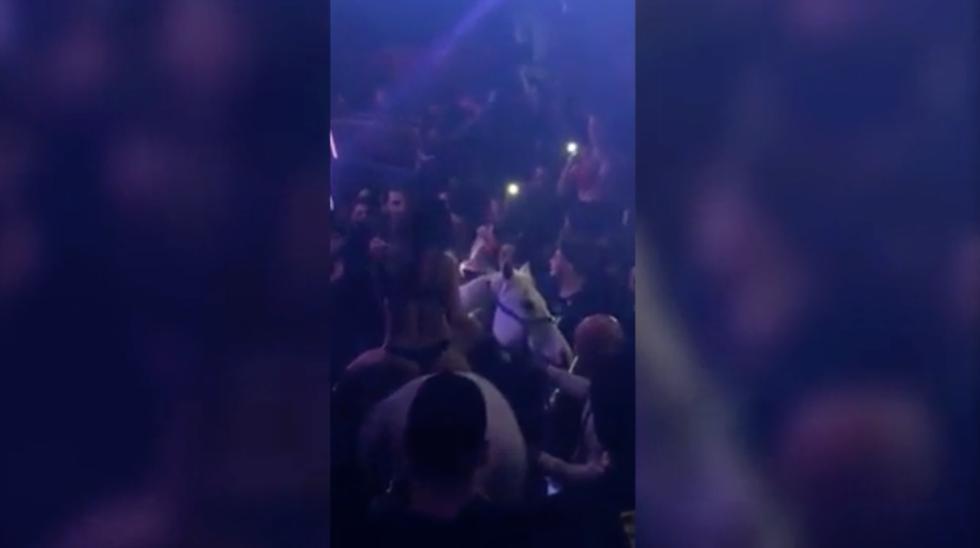 Un caballo se desplomó, lanzó y pateó a la mujer que lo montaba y hasta intentó morder al público asistente al local nocturno de Miami. (El Nuevo Herald)