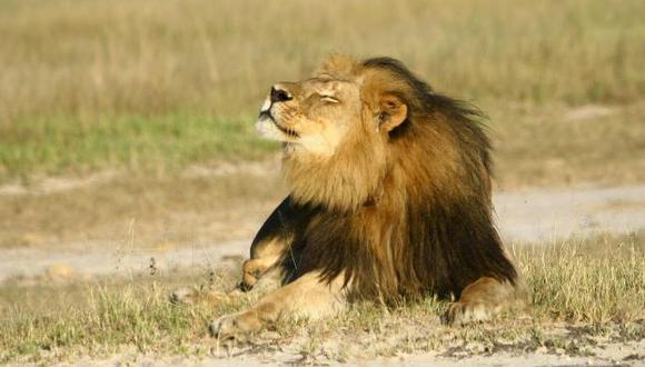 Zimbabue prohibió la caza de leones y elefantes tras el crimen de Cecil. (Reuters)