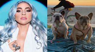 Lady Gaga recupera sanos y salvos a sus perros robados