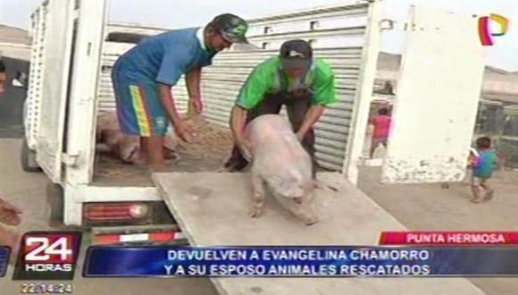 Armando Rivera, esposo de la valiente mujer, recogió los cerdos que también fueron arrastrados por el deslizamiento de lodo.