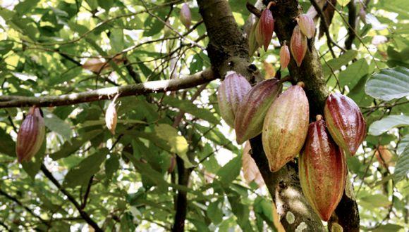 El cacao será uno de los productos beneficiados. (Foto: GEC)