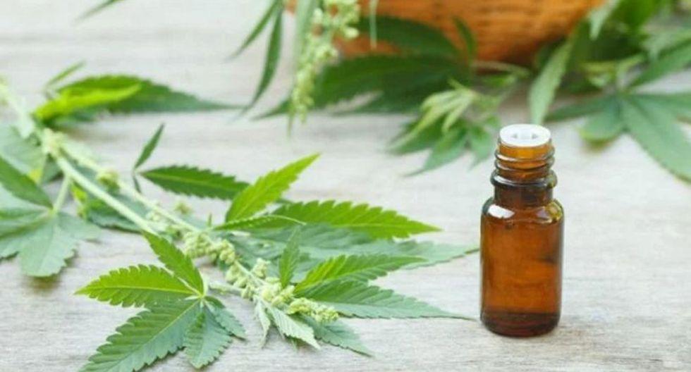 Un paso más. Uso de cannabis medicinal cada vez más cerca. (GEC)