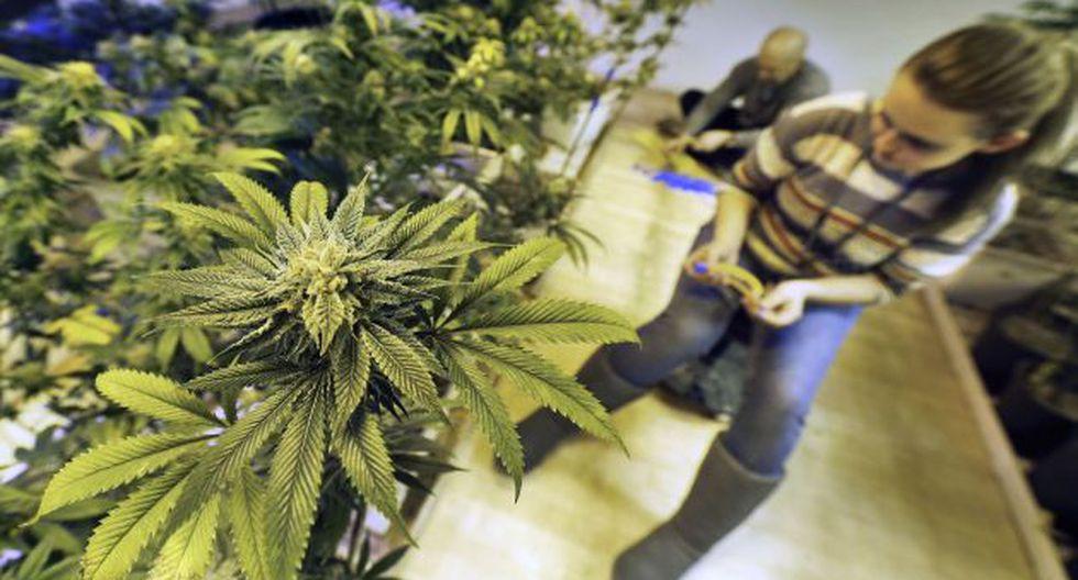Marihuana: Colorado permite desde hoy venta para uso recreativo. (AP)