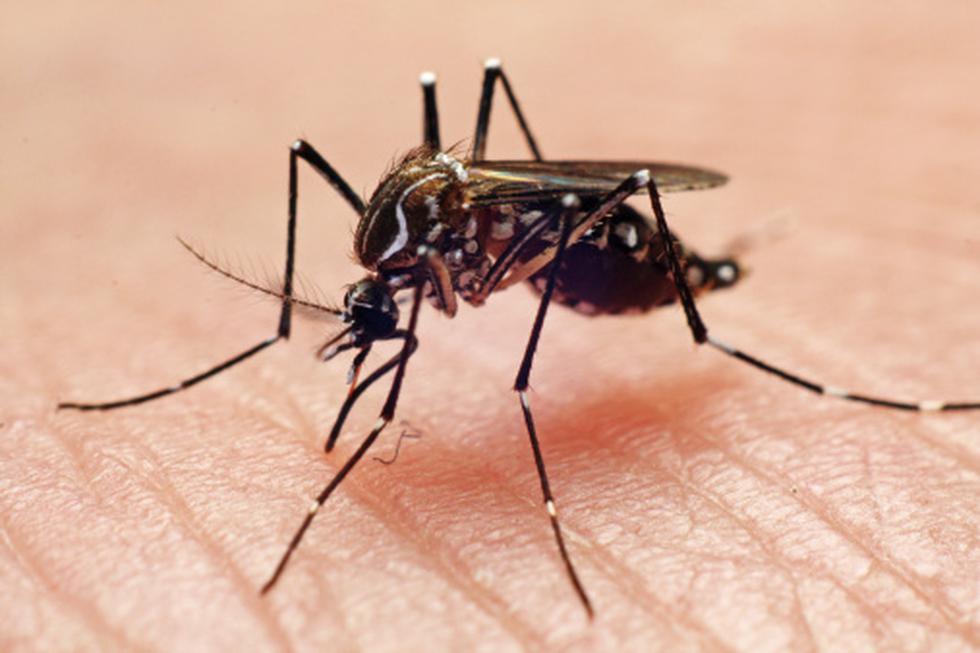 Karim Pardo Ruíz, de la dirección de Prevención y Control de Enfermedades Metaxénicas y Zoonosis del Minsa, dijo que las altas temperaturas provocan que el mosquito Aedes aegypti se reproduzca con rapidez.  (Getty)