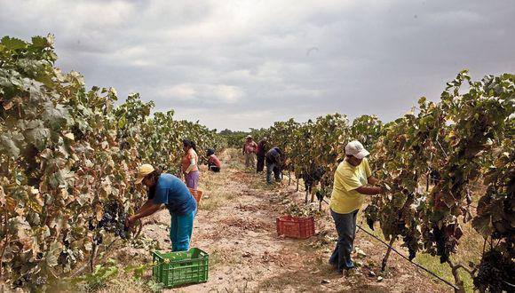 """""""Es el agro el que ha permitido que el Perú mantenga niveles de exportación en el sector cuando las demás actividades productivas la están pasando tan difícil""""."""