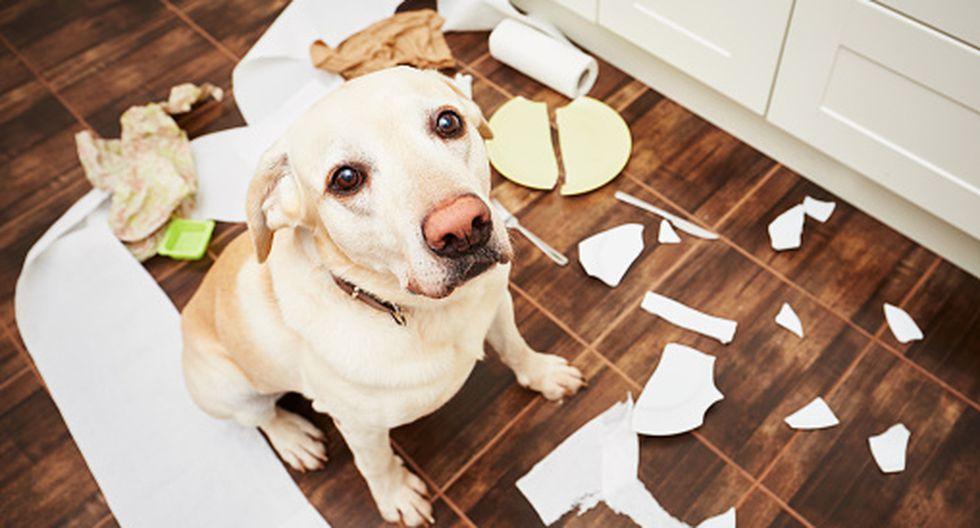 ¿Le gritas a tu perro? Esta es la razón por la que no deberías hacerlo según la ciencia. (Getty)
