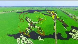 Pinturas gigantes 3D en arrozales impulsan turismo en China