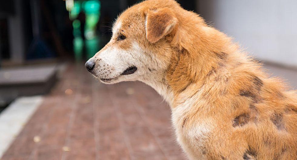 Si se aprueba esta iniciativa legislativa, el Estado apoyará las campañas de esterilización para controlar la sobrepoblación de perros y gatos. (GETTY)