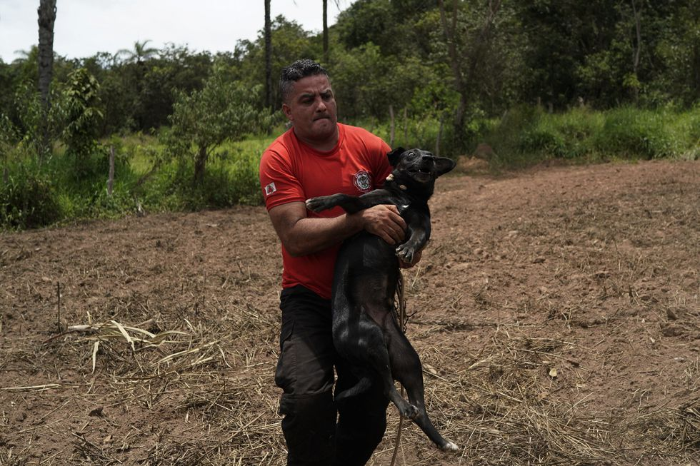 Bomberos rescataron al animal. (Foto: AP)