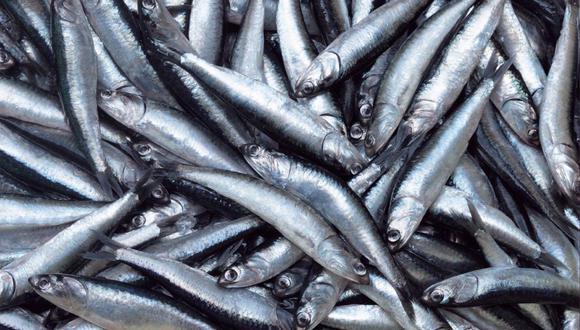 Solo podrán realizar faenas de pesca aquellas embarcaciones registradas y autorizadas para desarrollar actividades extractivas. (Foto: GEC)
