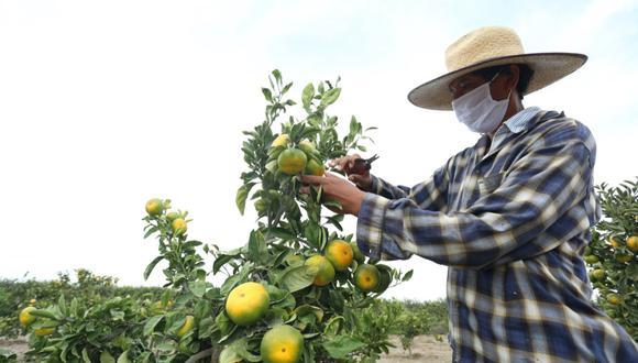 Los niveles de pobreza en las personas que se dedican al agro pasaron de un 82.6% en el año 2000 a un 34% en 2019.