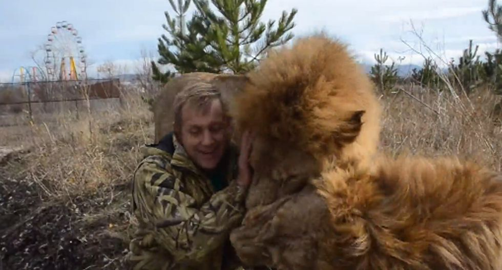 Se suele pensar que los leones son animales feroces e impredecibles, pero estos demuestran todo lo contrario. (Foto: Facebook)