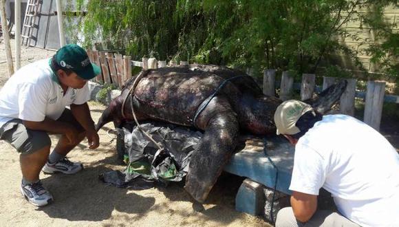 Animal fue hallado en la orilla. (Richard Luna)