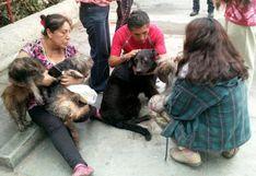 Bomberos rescataron a siete mascotas de incendio en Callao