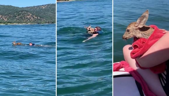 Al ver al animal en apuros, el buen samaritano no lo pensó dos veces y se lanzó al agua para rescatarlo. (Foto: Kenny Croyle en YouTube)