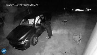 Oso es grabado abriendo puerta e ingresando a vehículo en Estados Unidos