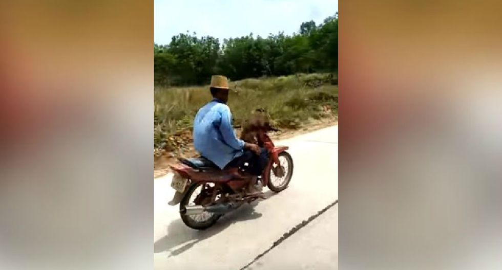 El mono agarra firmemente el manubrio de la moto. (YouTube: Viralhog)