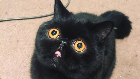 Un adorable gato conquistó los corazones de los usuarios de las redes sociales con su peculiar mirada.   Crédito: @goodboigremlin / Instagram.