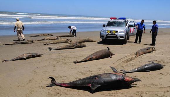 ¿SELECCIÓN NATURAL? Ministra Gladys Triveño aseguró que la mortandad de delfines es periódica. (Heinz Plenge)