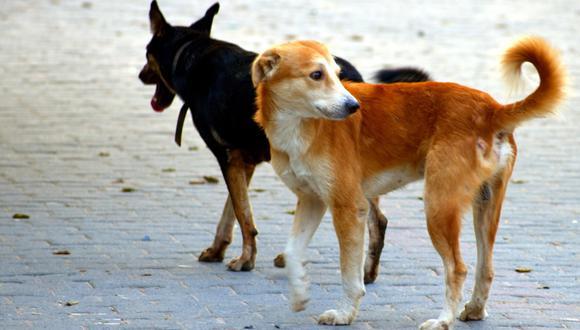 Unos perros sin hogar fueron la salvación de una pequeña abandonada a su suerte. (Foto: Pixabay/Referencial)