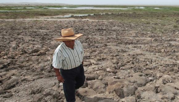 Hasta el momento 3,016 hectáreas de cultivo se han visto afectadas en Piura debido a la falta de lluvias. (USI)