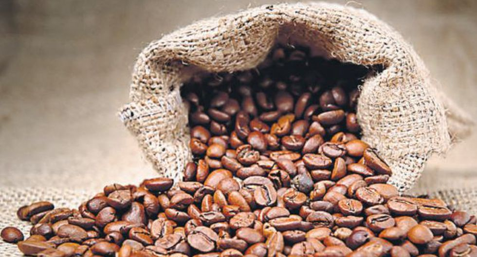 PROYECCIÓN. Café arábigo podría extinguirse. (USI)