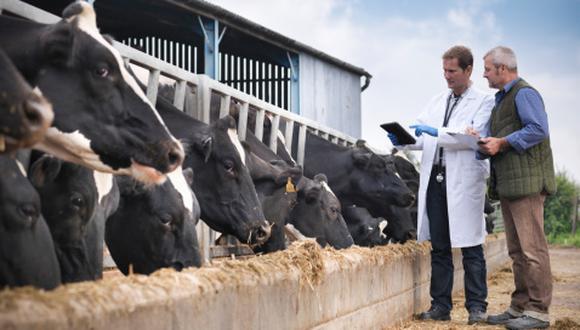 La apertura de la industria láctea canadiense es una prioridad para el gobierno de Trump. (Foto: Getty)
