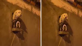 Bolivia: Dueños crean un balcón personalizado para su perrita