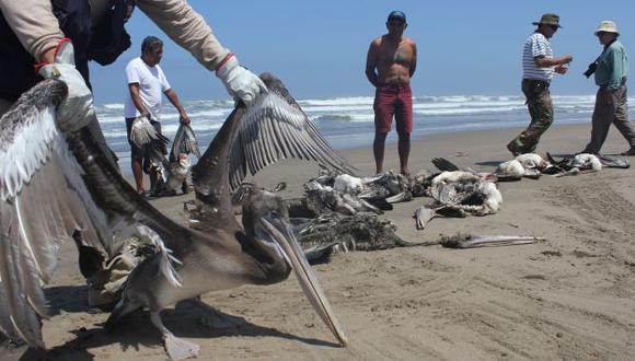 Falta de alimento ocasionó miles de muertes de animales. (USI)
