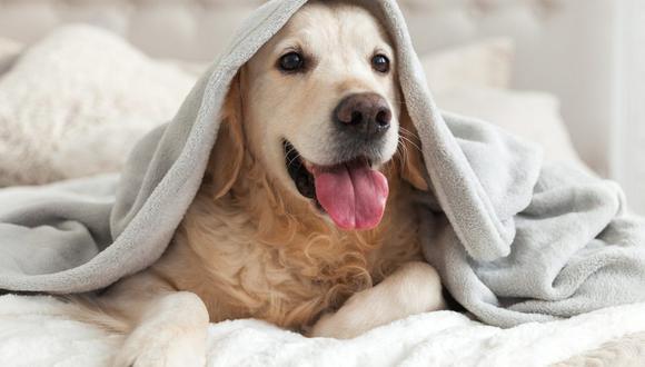 "Lanza campaña ""Por amor a las mascotas"" para ayudar a un animal abandonado. (Foto: Bao_5 / Pixabay)"